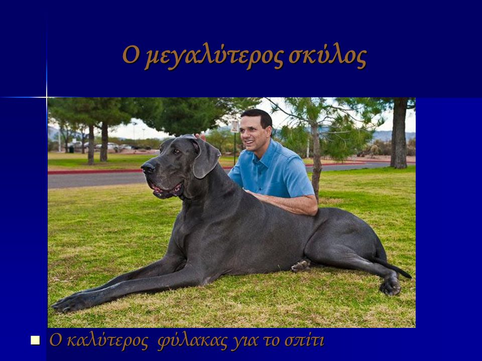 Ο μεγαλύτερος σκύλος Ο καλύτερος φύλακας για το σπίτι