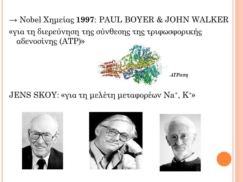 → Nobel Χημείας 1997: PAUL BOYER & JOHN WALKER «για τη διερεύνηση της σύνθεσης της τριφωσφορικής αδενοσίνης (ΑΤΡ)» JENS SKOY: «για τη μελέτη μεταφορέων Na+, K+»