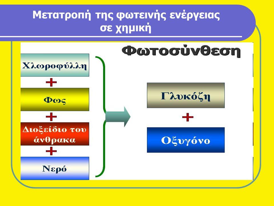 Μετατροπή της φωτεινής ενέργειας σε χημική