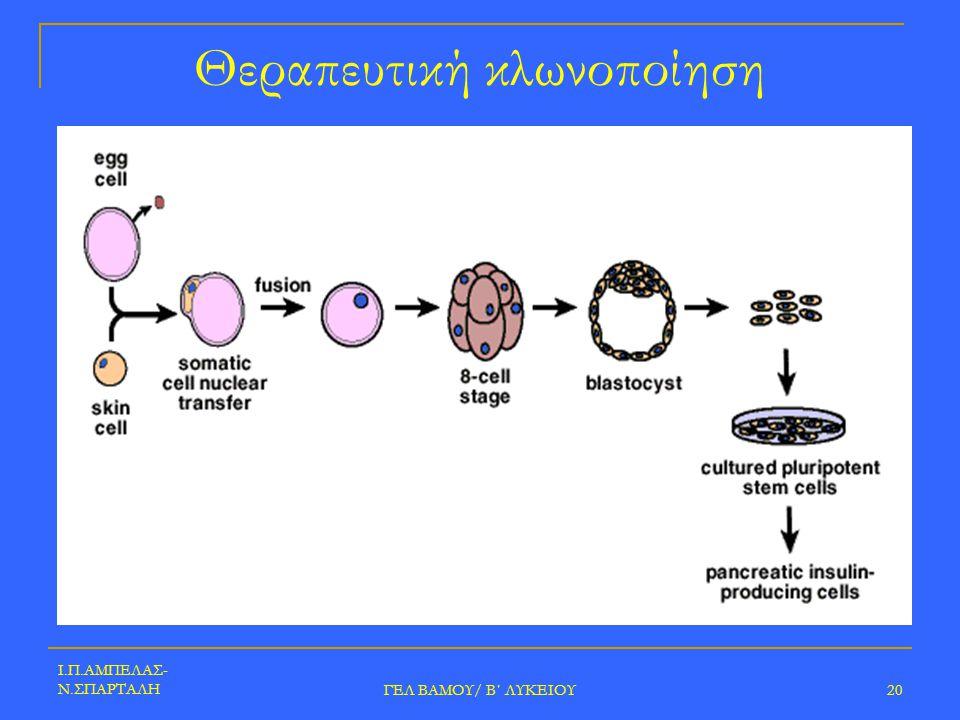 Θεραπευτική κλωνοποίηση