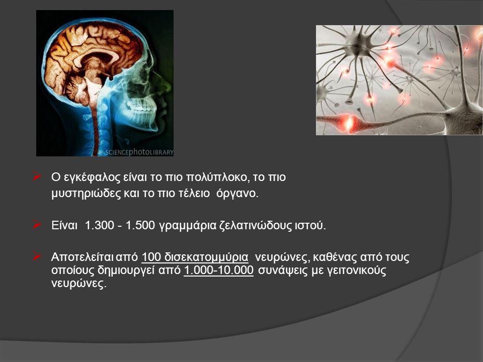 Ο εγκέφαλος είναι το πιο πολύπλοκο, το πιο