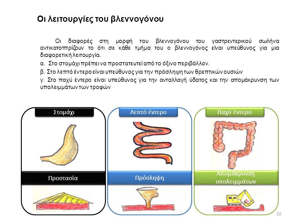 Οι λειτουργίες του βλεννογόνου