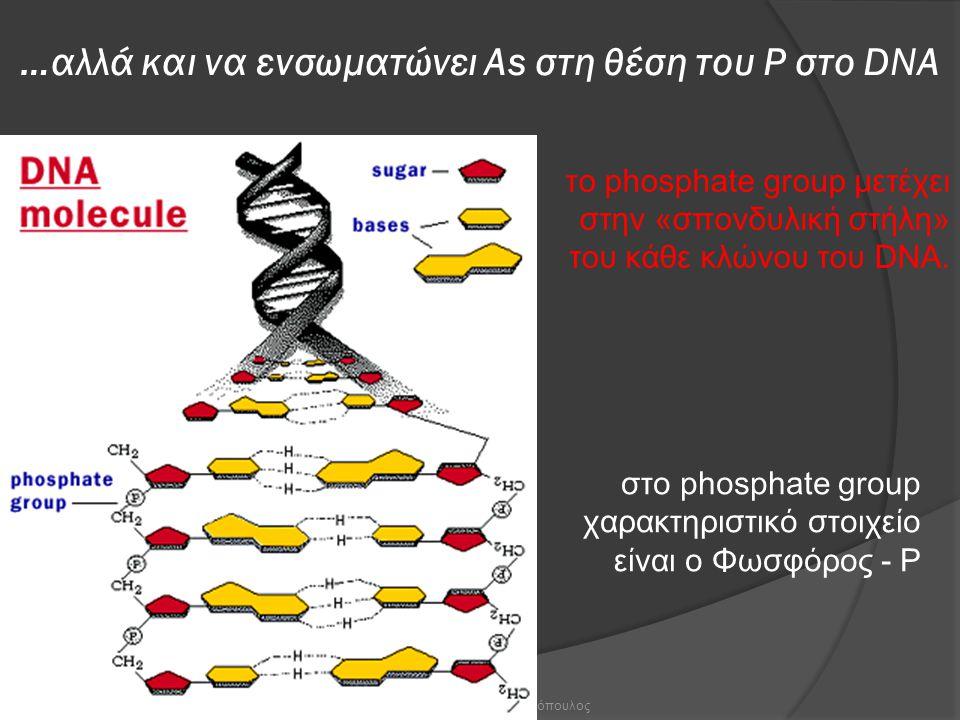 …αλλά και να ενσωματώνει Αs στη θέση του Ρ στο DNA