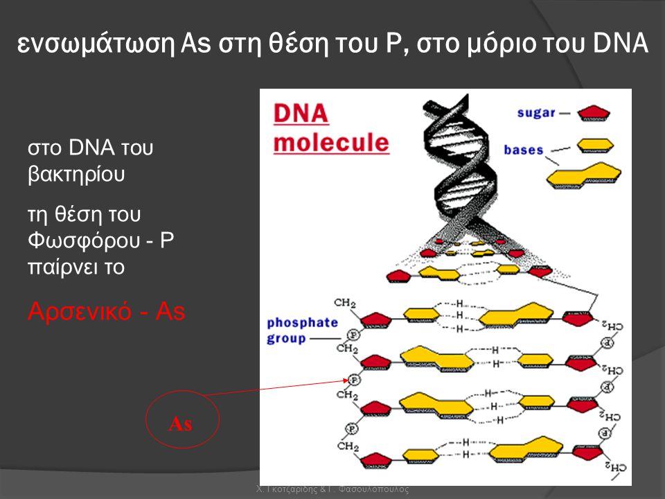 ενσωμάτωση Αs στη θέση του Ρ, στο μόριο του DNA