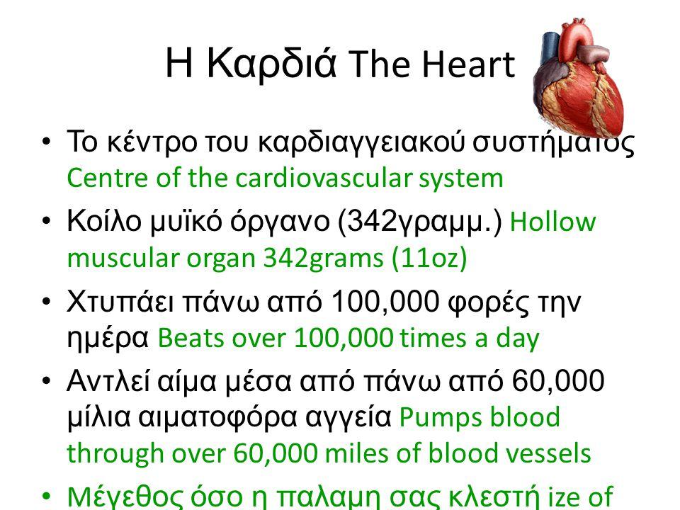 Η Καρδιά The Heart Το κέντρο του καρδιαγγειακού συστήματος Centre of the cardiovascular system.