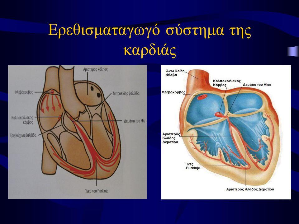 Ερεθισματαγωγό σύστημα της καρδιάς