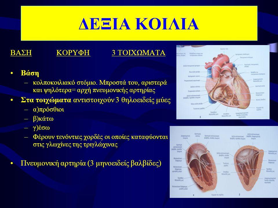 ΔΕΞΙΑ ΚΟΙΛΙΑ ΒΑΣΗ ΚΟΡΥΦΗ 3 ΤΟΙΧΩΜΑΤΑ Βάση
