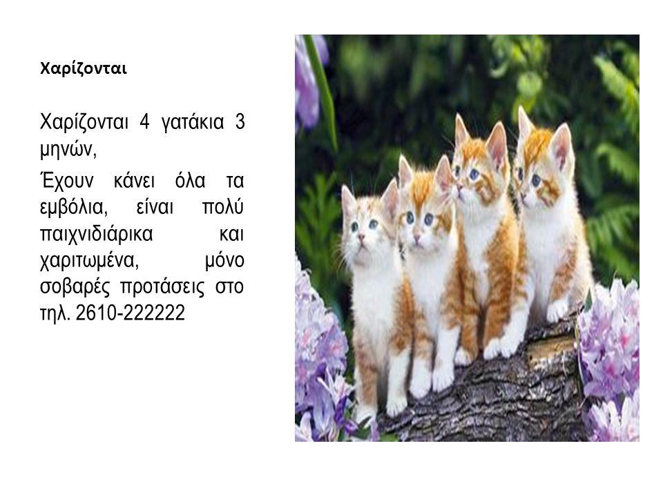 Χαρίζονται 4 γατάκια 3 μηνών,