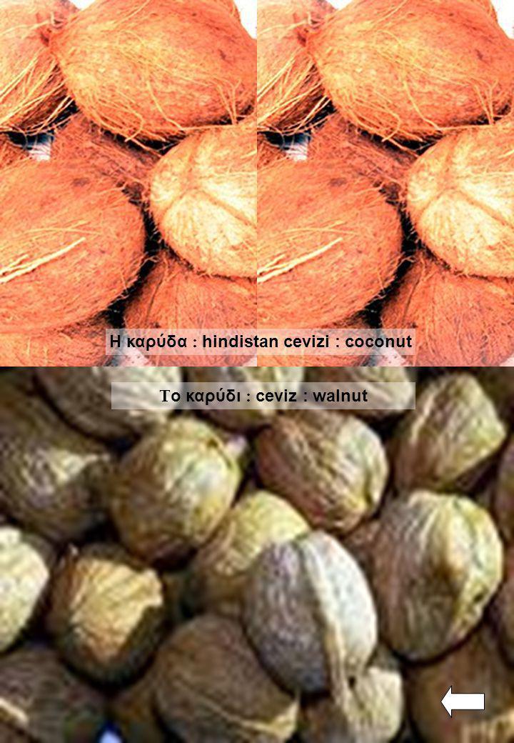 Η καρύδα : hindistan cevizi : coconut Το καρύδι : ceviz : walnut