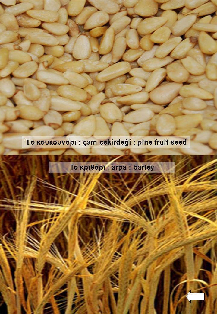 Το κουκουνάρι : çam çekirdeği : pine fruit seed