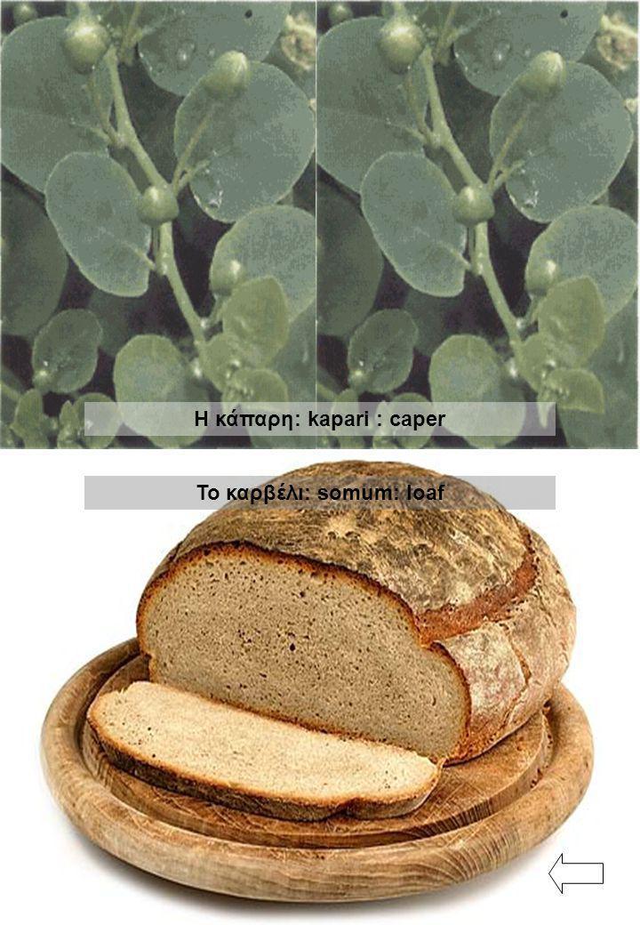 Η κάπαρη: kapari : caper Το καρβέλι: somum: loaf