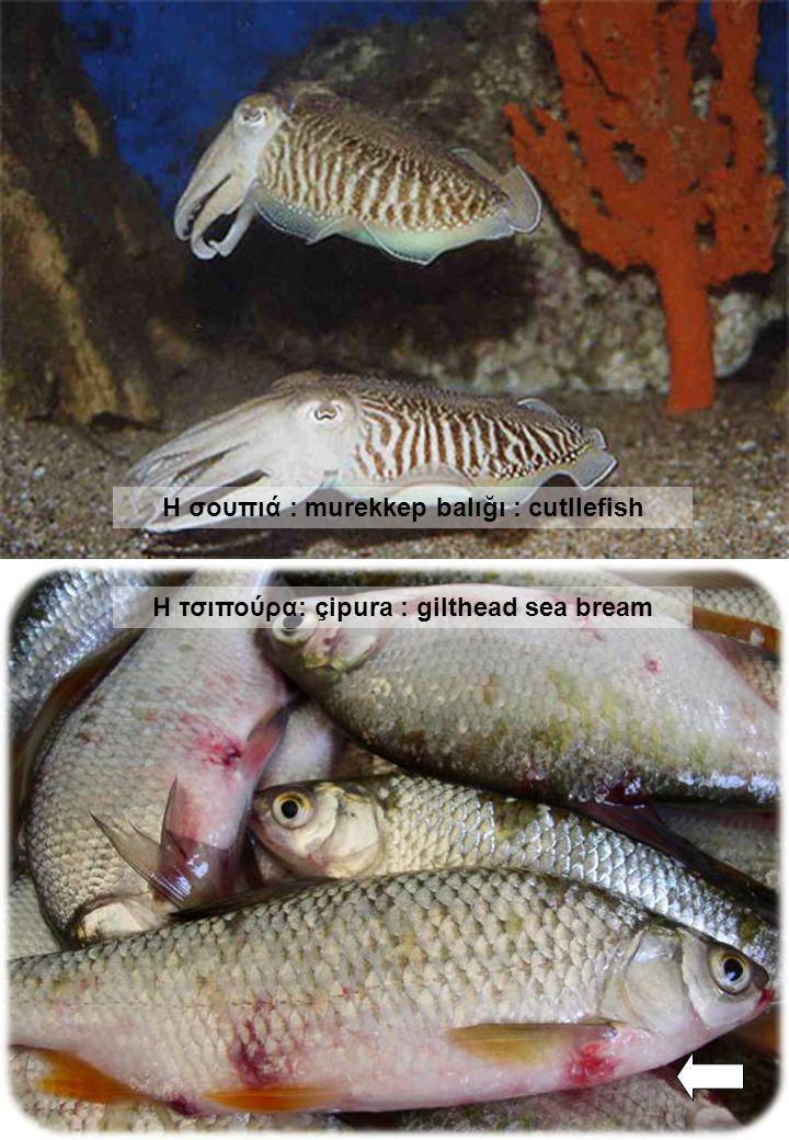Η σουπιά : murekkep balığı : cutllefish