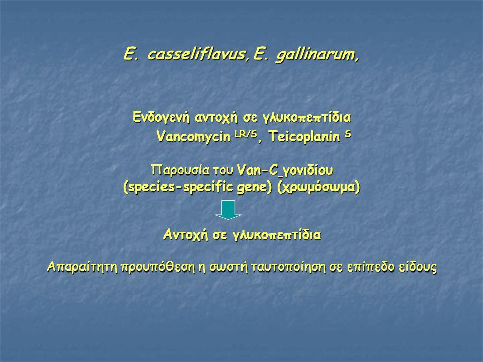 E. casseliflavus, E. gallinarum,