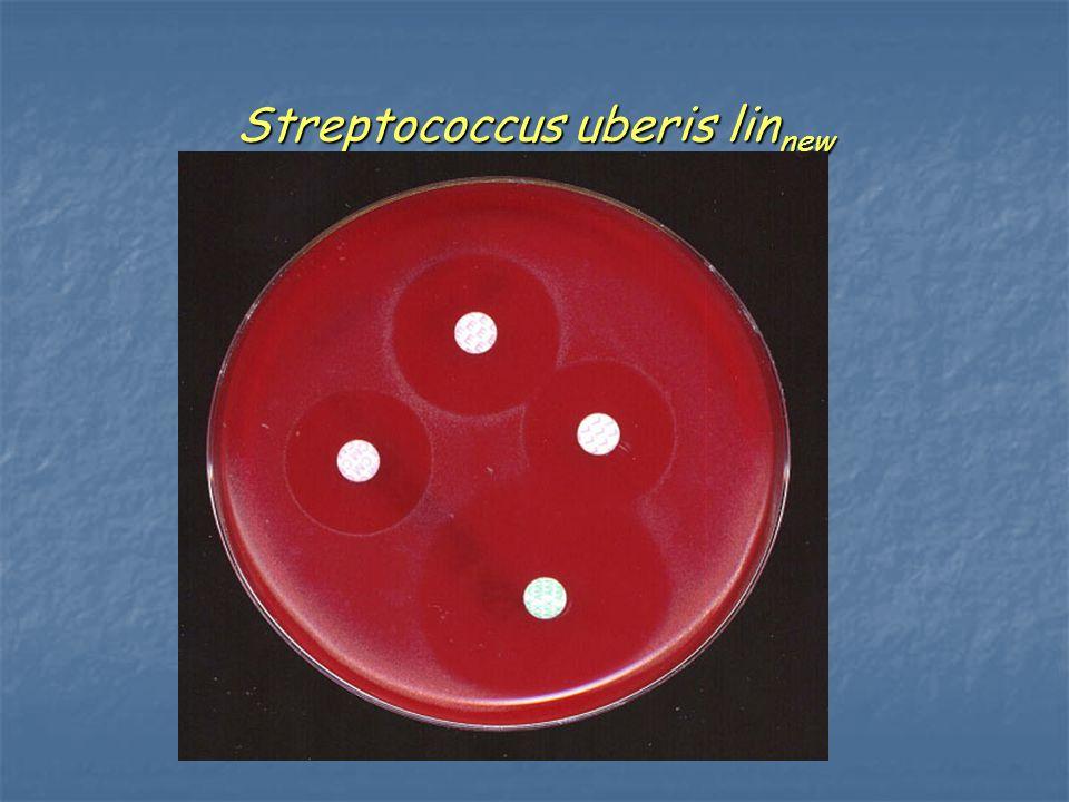 Streptococcus uberis linnew