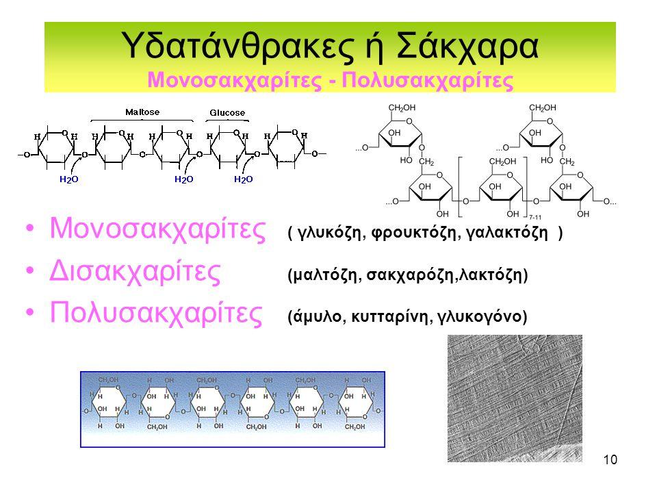 Υδατάνθρακες ή Σάκχαρα Μονοσακχαρίτες - Πολυσακχαρίτες