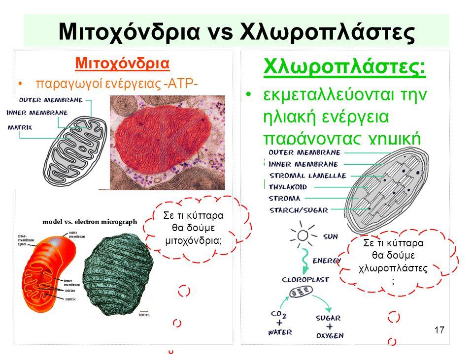 Μιτοχόνδρια vs Χλωροπλάστες