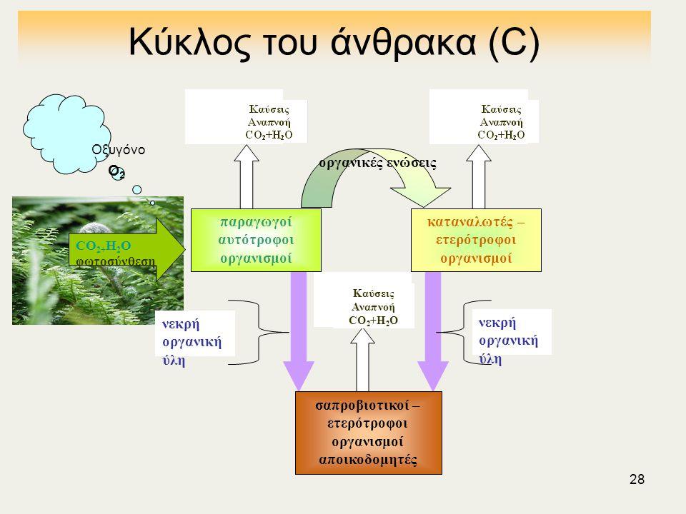 Κύκλος του άνθρακα (C) νεκρή οργανική ύλη παραγωγοί