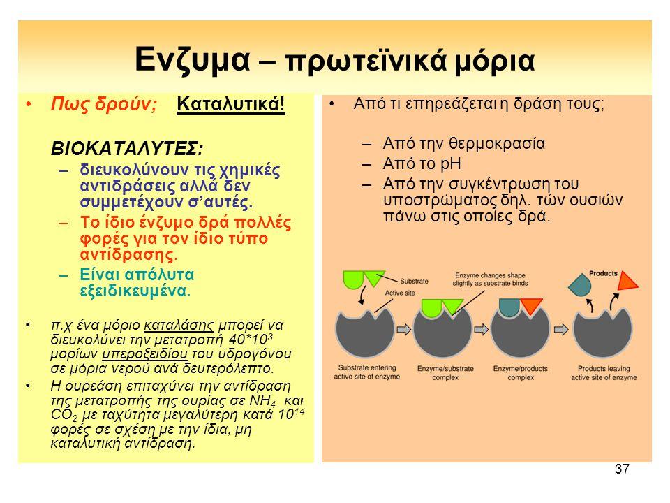 Ενζυμα – πρωτεϊνικά μόρια