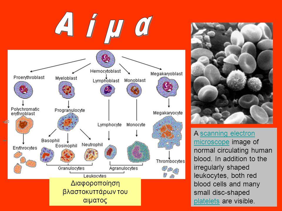 Διαφοροποίηση βλαστοκυττάρων του αιματος