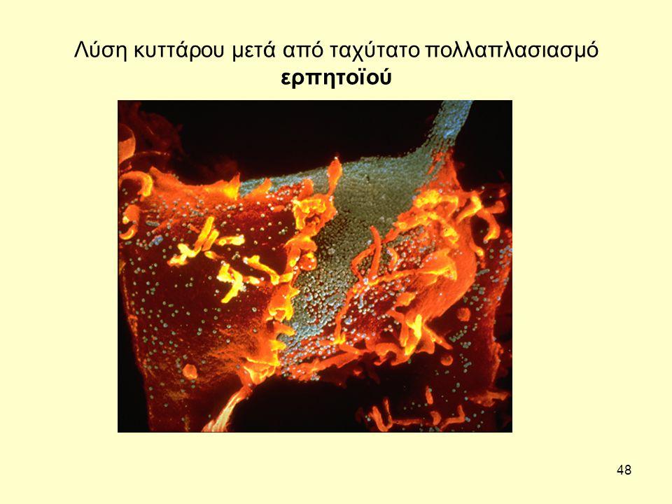 Λύση κυττάρου μετά από ταχύτατο πολλαπλασιασμό ερπητοϊού