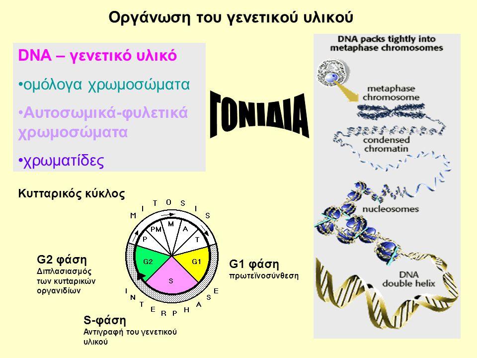 Οργάνωση του γενετικού υλικού