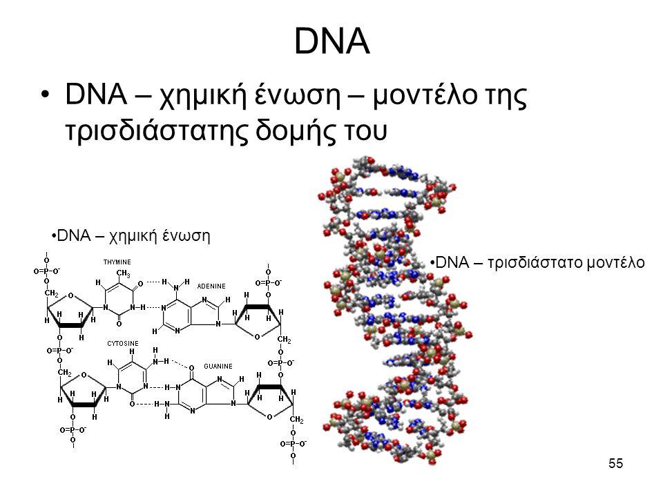 DNA DNA – χημική ένωση – μοντέλο της τρισδιάστατης δομής του