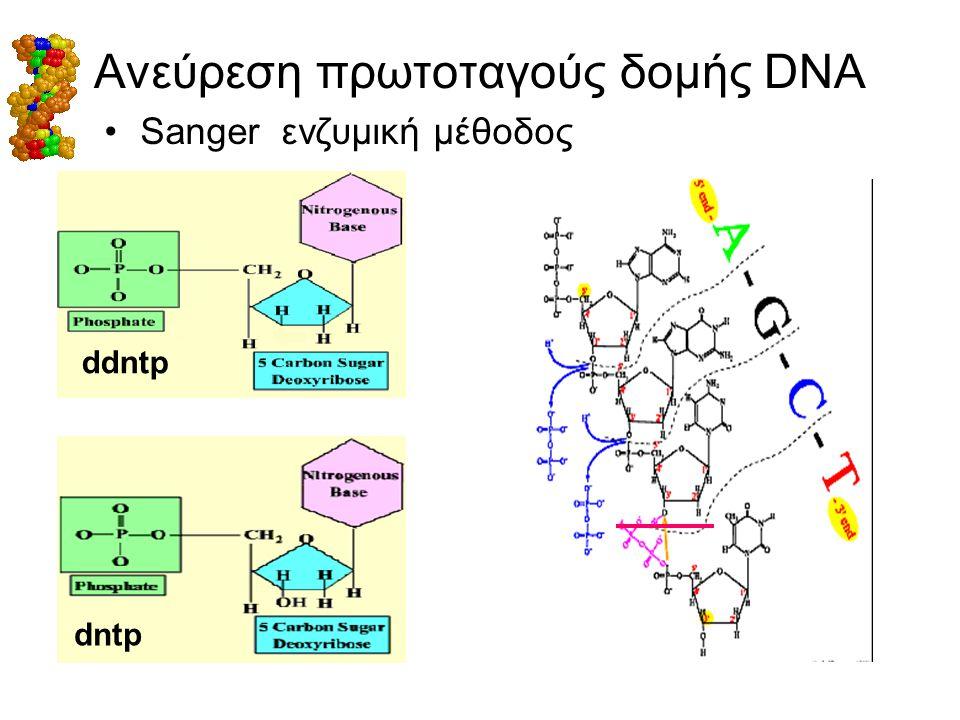 Ανεύρεση πρωτοταγούς δομής DNA