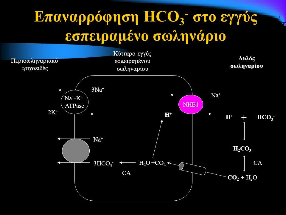 Επαναρρόφηση HCO3- στο εγγύς εσπειραμένο σωληνάριο