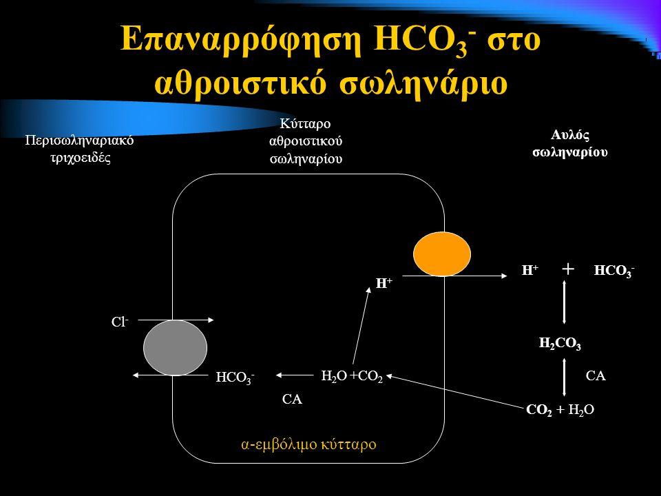 Επαναρρόφηση HCO3- στο αθροιστικό σωληνάριο