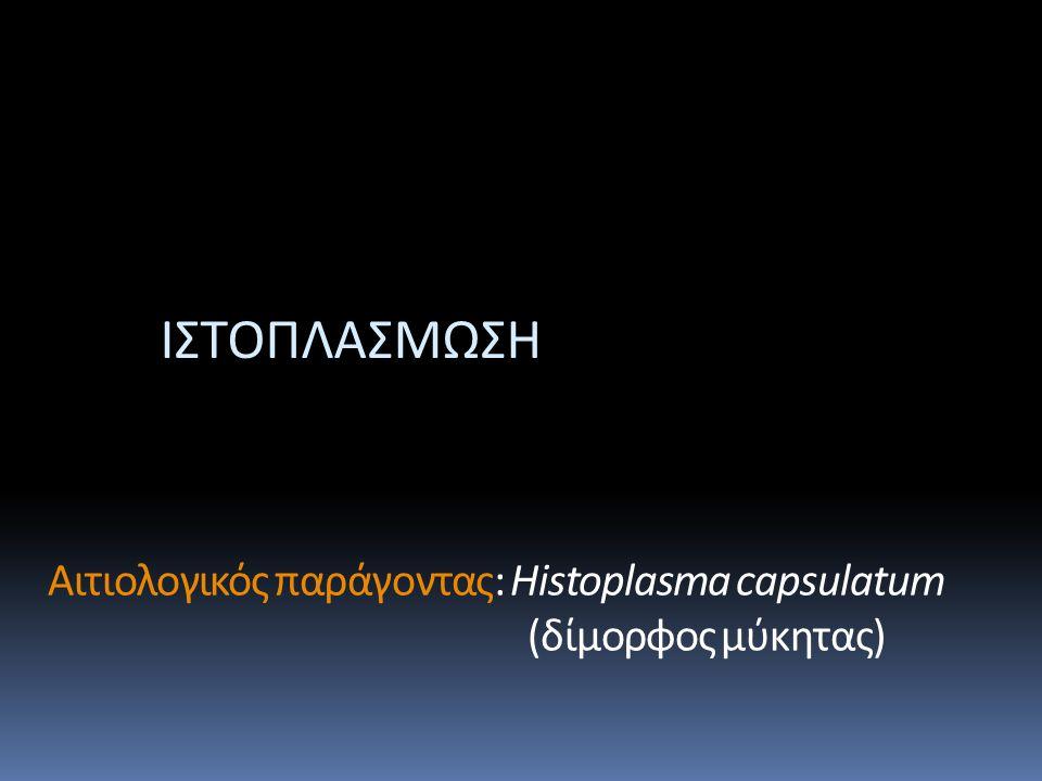 Αιτιολογικός παράγοντας: Histoplasma capsulatum (δίμορφος μύκητας)