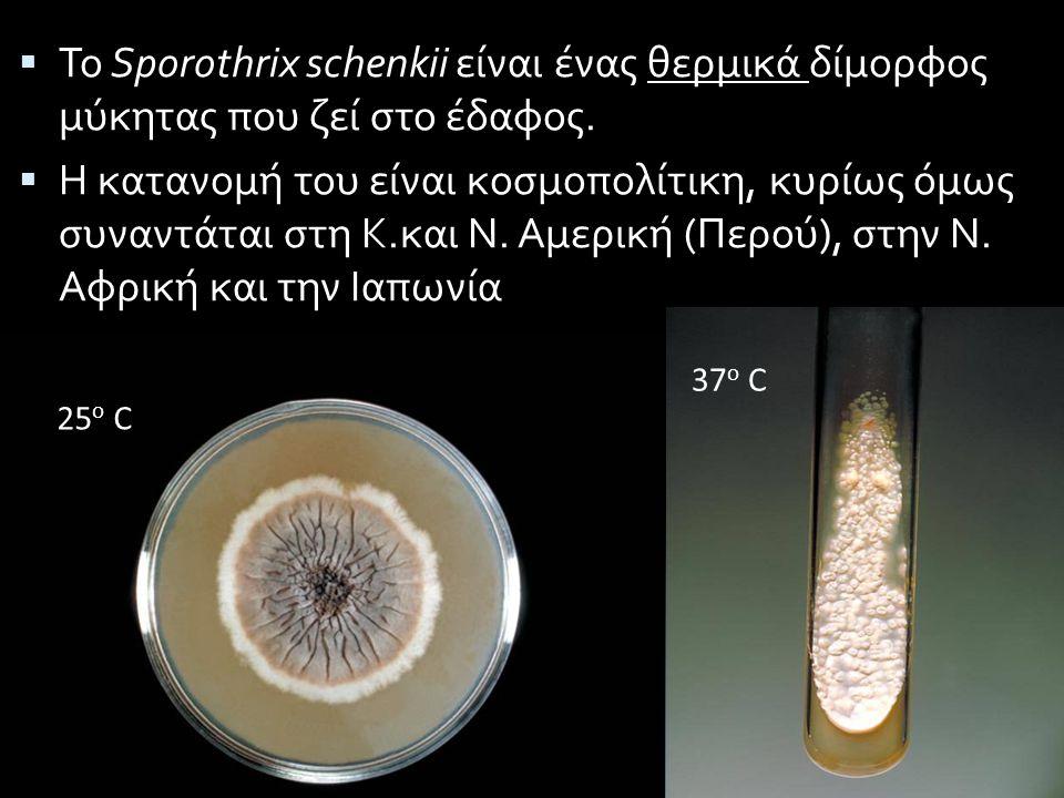Το Sporothrix schenkii είναι ένας θερμικά δίμορφος μύκητας που ζεί στο έδαφος.