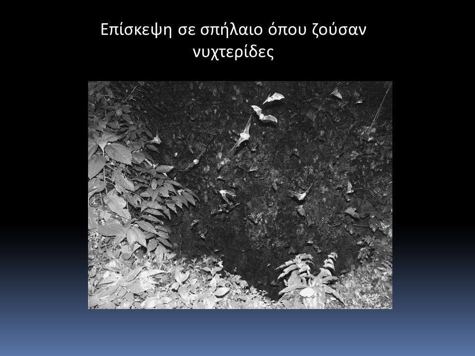 Επίσκεψη σε σπήλαιο όπου ζούσαν νυχτερίδες