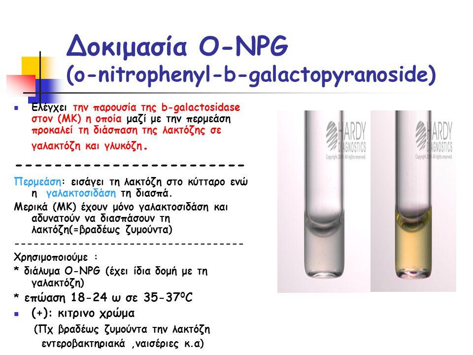 Δοκιμασία O-NPG (o-nitrophenyl-b-galactopyranoside)