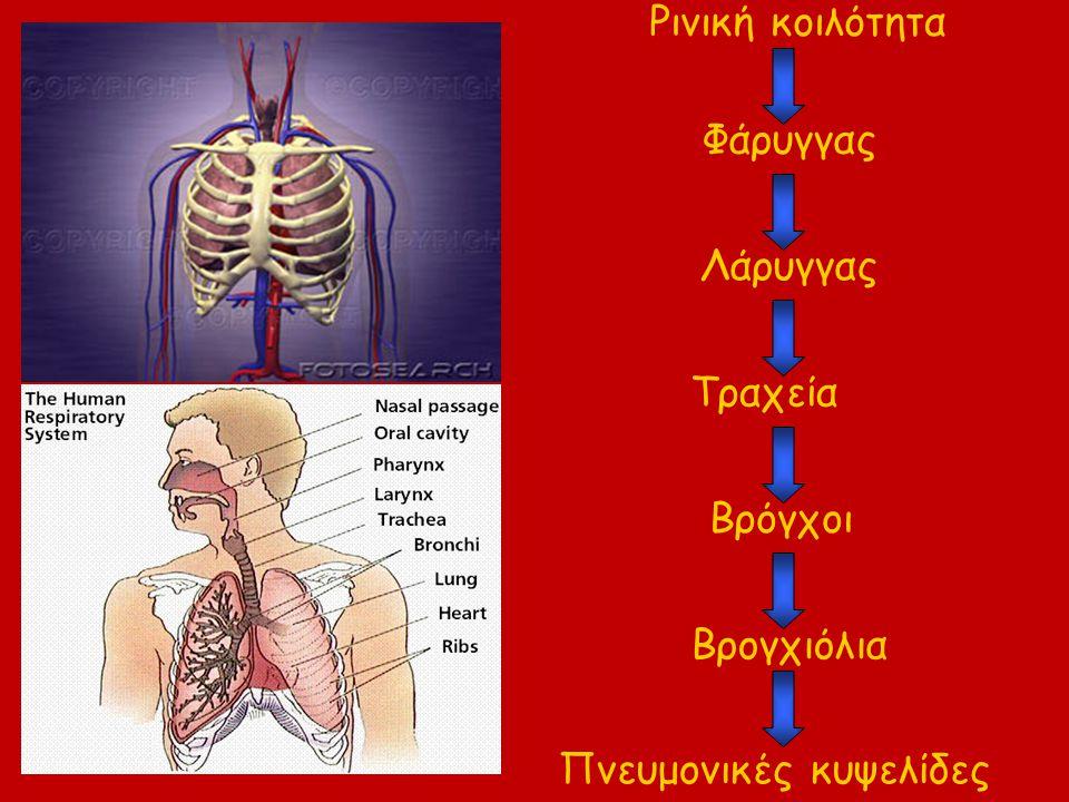 Πνευμονικές κυψελίδες