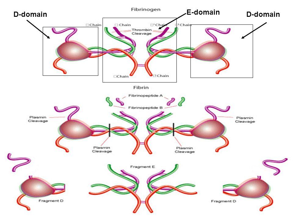 E-domain D-domain D-domain