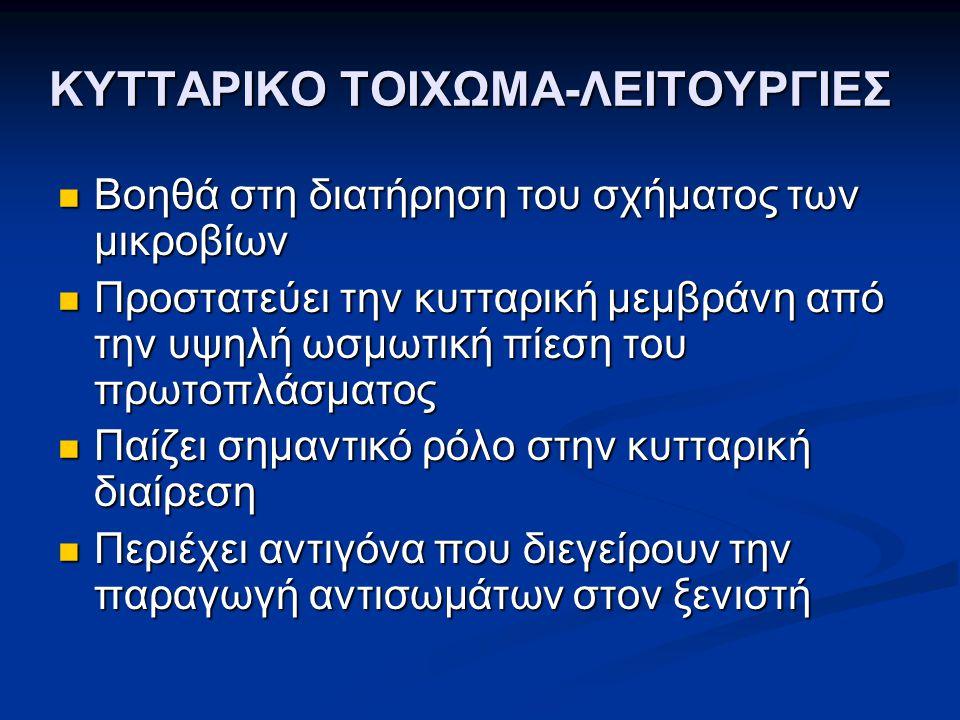 ΚΥΤΤΑΡΙΚΟ ΤΟΙΧΩΜΑ-ΛΕΙΤΟΥΡΓΙΕΣ