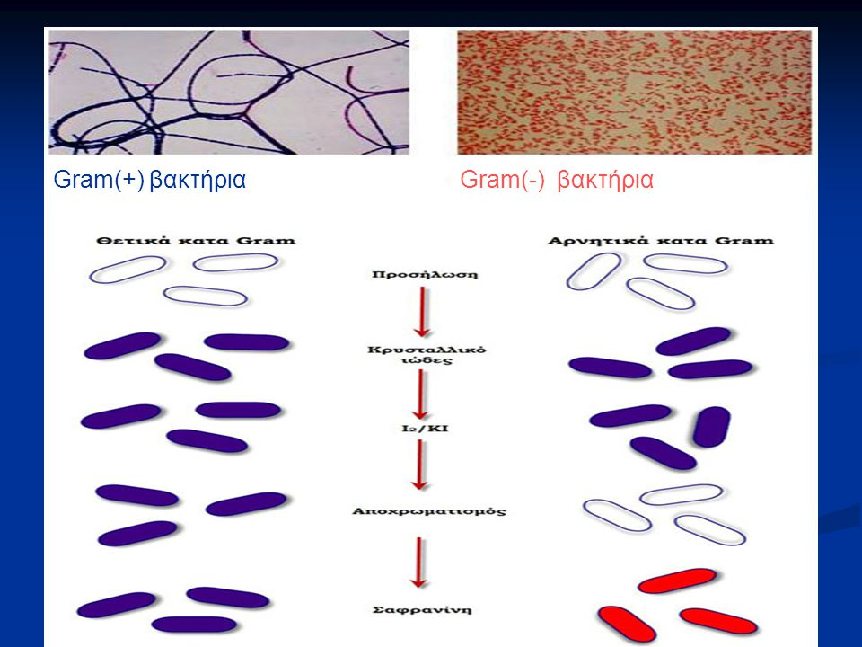 Gram(+) βακτήρια Gram(-) βακτήρια