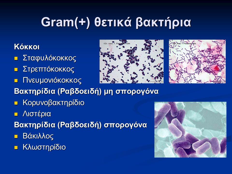 Gram(+) θετικά βακτήρια