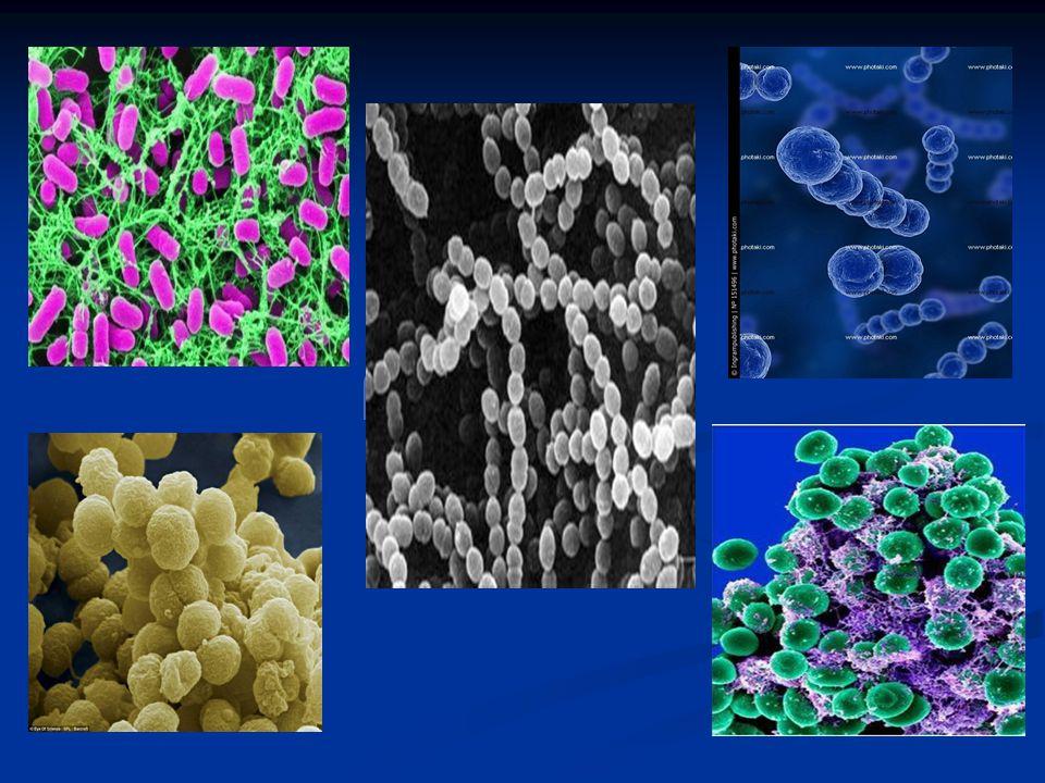 βακτηρια7.jpg