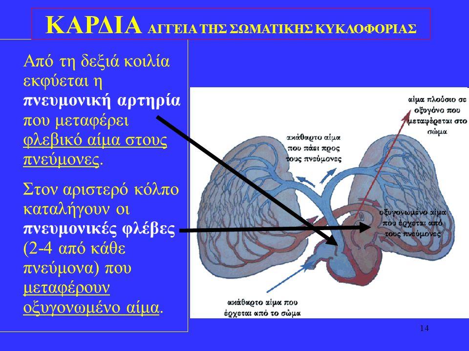ΚΑΡΔΙΑ ΑΓΓΕΙΑ ΤΗΣ ΣΩΜΑΤΙΚΗΣ ΚΥΚΛΟΦΟΡΙΑΣ