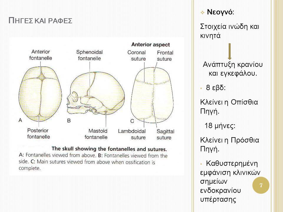 Ανάπτυξη κρανίου και εγκεφάλου.
