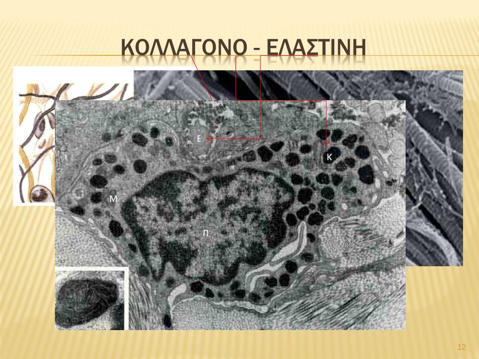 Κολλαγονο - ελαστινη