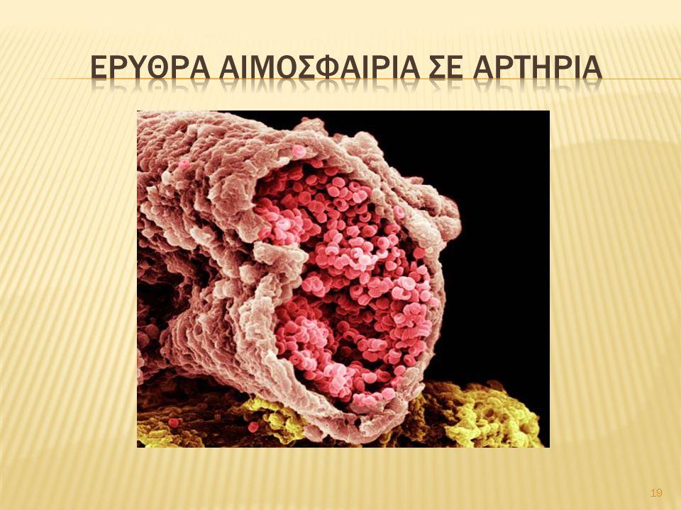 Ερυθρα αιμοσφαιρια σε αρτηρια
