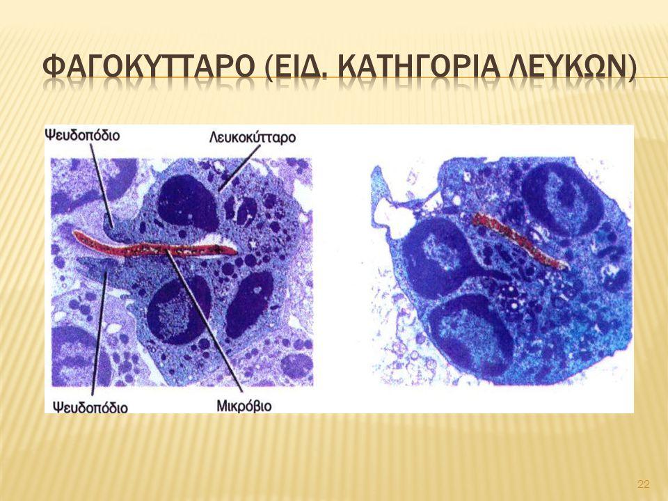 Φαγοκυτταρο (ειδ. Κατηγορια λευκων)