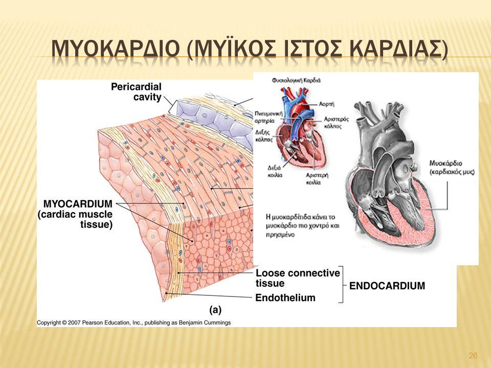 Μυοκαρδιο (μυϊκοσ ιστοσ καρδιασ)
