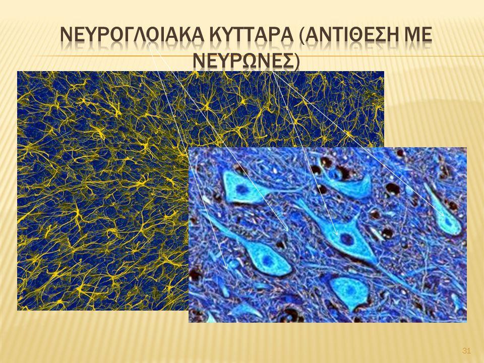 Νευρογλοιακα κυτταρα (αντιθεση με νευρωνεσ)