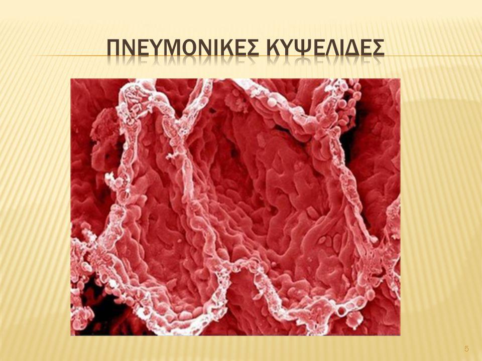 Πνευμονικεσ κυψελιδεσ