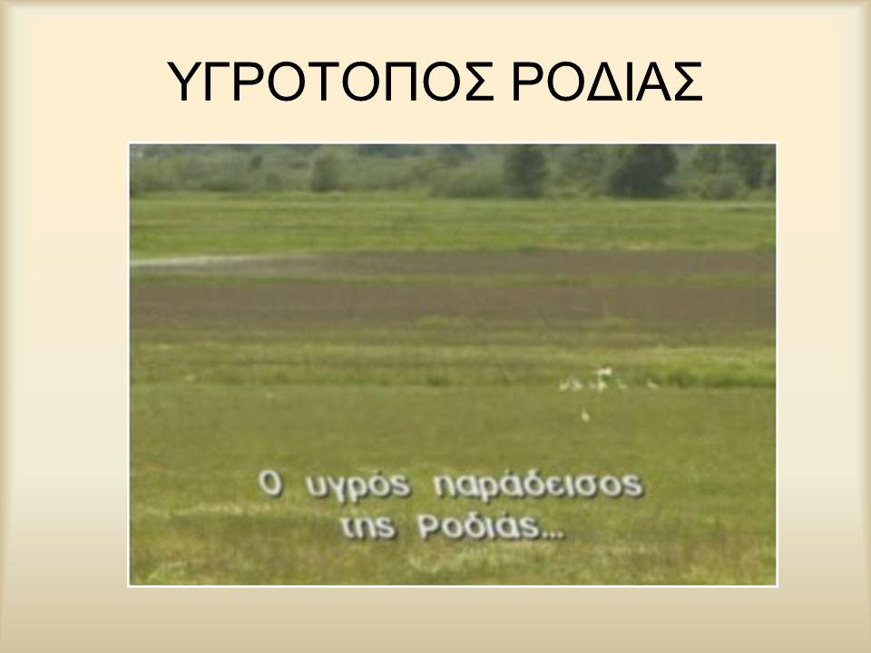 ΥΓΡΟΤΟΠΟΣ ΡΟΔΙΑΣ