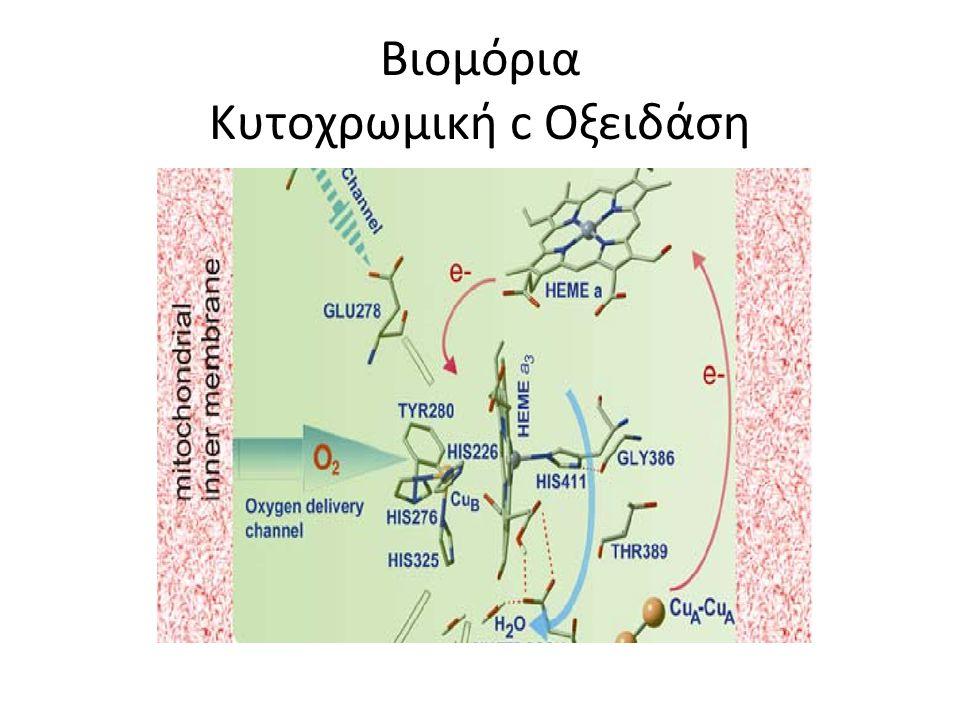 Βιομόρια Κυτοχρωμική c Οξειδάση
