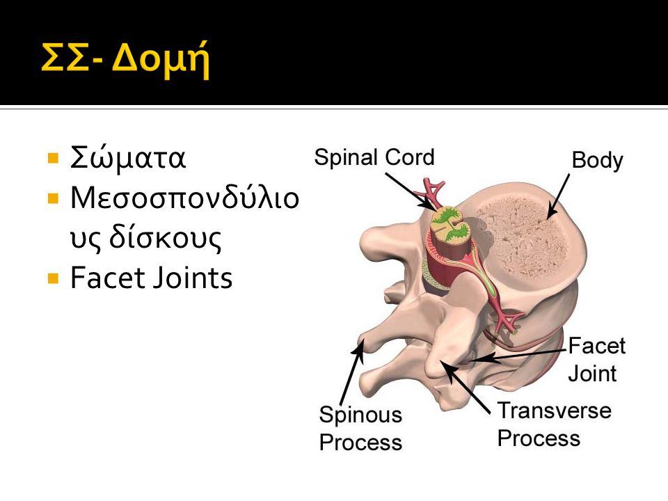 Σώματα Μεσοσπονδύλιους δίσκους Facet Joints